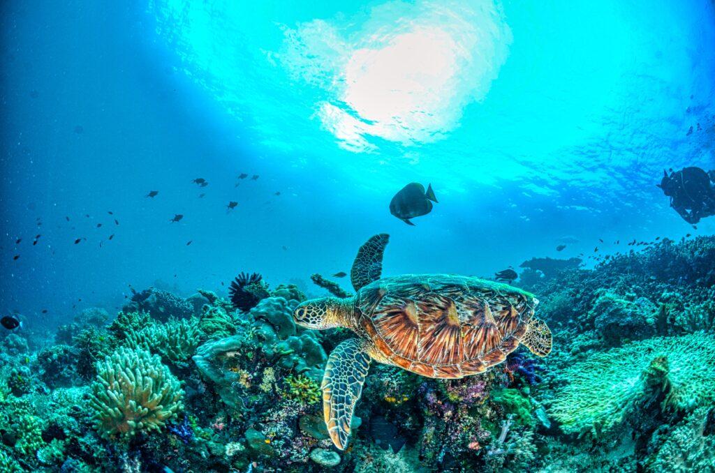 la vie sous marine en snorkeling